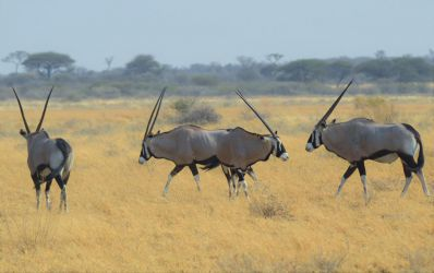 6. Central Kalahari Game Reserve (74)