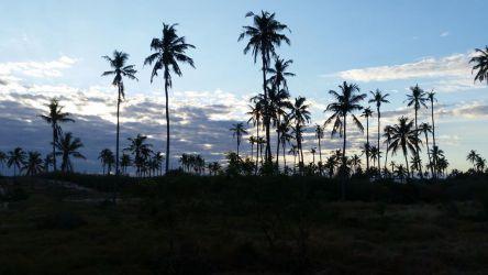 Smukt palme landskab på Ulala Lodge