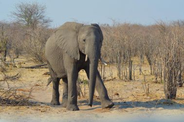 7. Makgadikgadi Pans National Park (112)