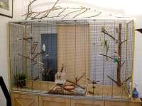 Die Unterkunft eurer Geier - Vogelforen.de - Seite 5