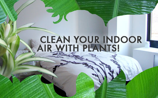 6 House Plants That Clean Indoor Air |