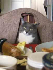 Breakfast in Tweed