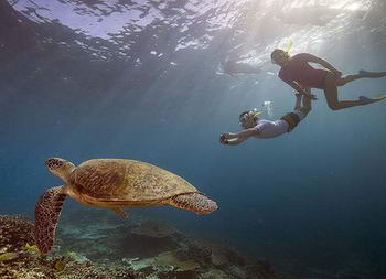 Sea turtles and diving in Thailand