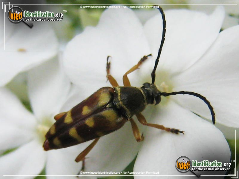 InsectID Complete Database