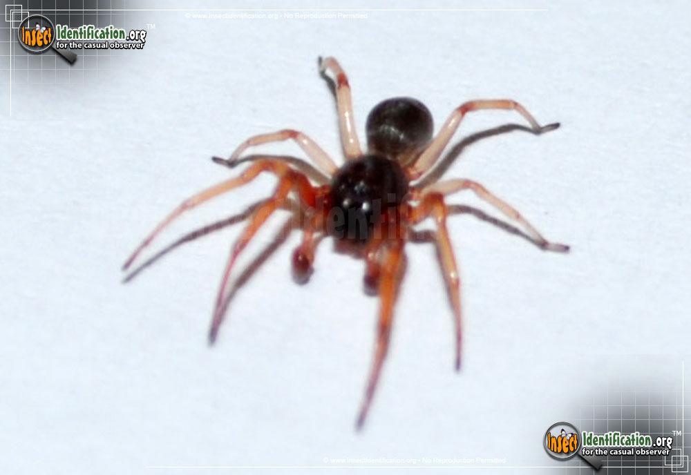 Running Spider
