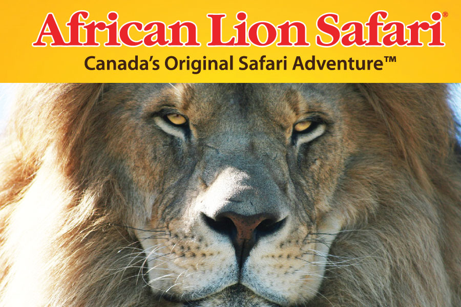 Insert 七月推薦:African Lion Safari 零距離