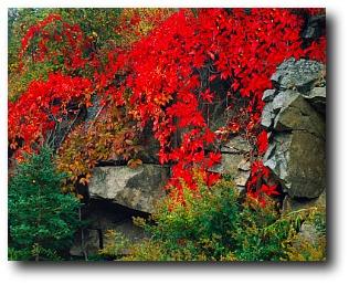 Vermont Fall Wallpaper Fall Foliage In New England Maine Fall Foliage Fall