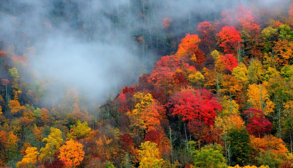 Gatlinburg fall foliage throughout the Smokies