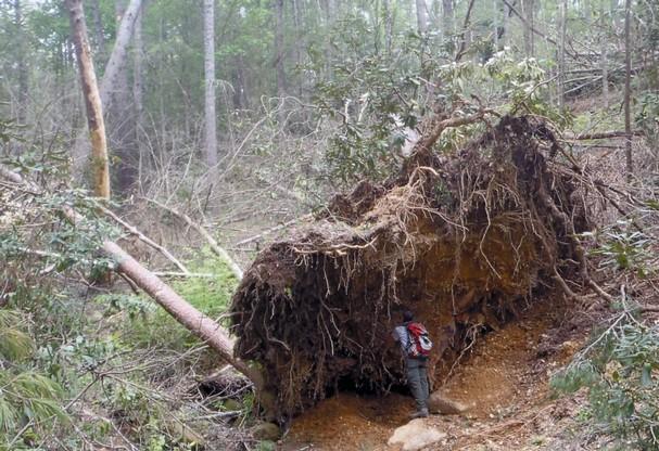 tornado_damage