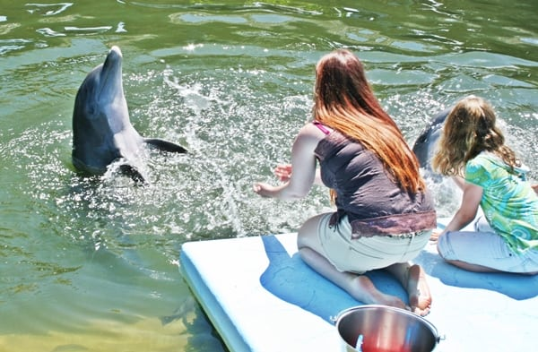 Children helpl train dolphins - everyone seems happy