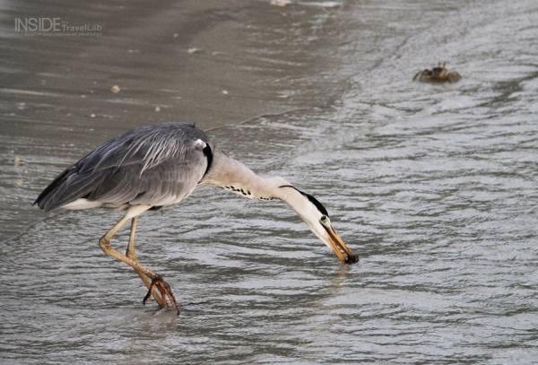Maldives Bird Hungry