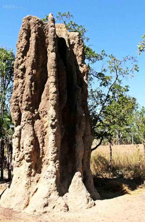 Non magnetic termite mound