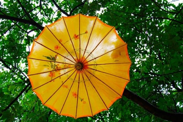 Parasol in tree Reed Flute Caves
