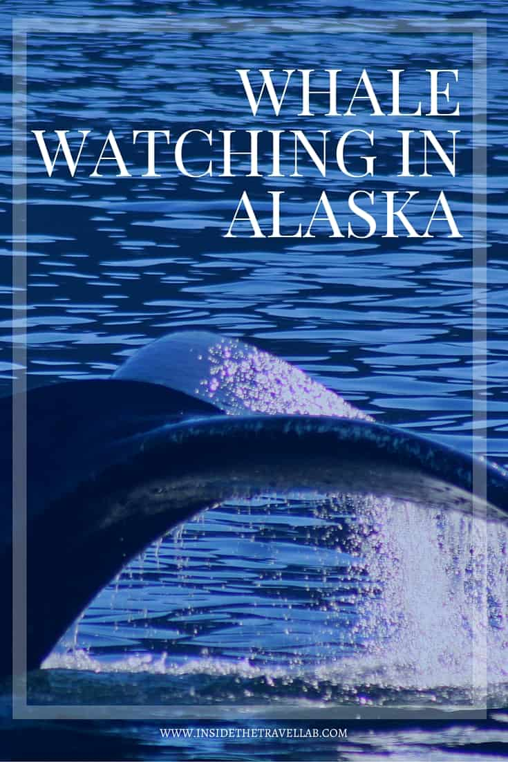 One of the best things I've ever done > whale watching in Alaska from @insidetravellab