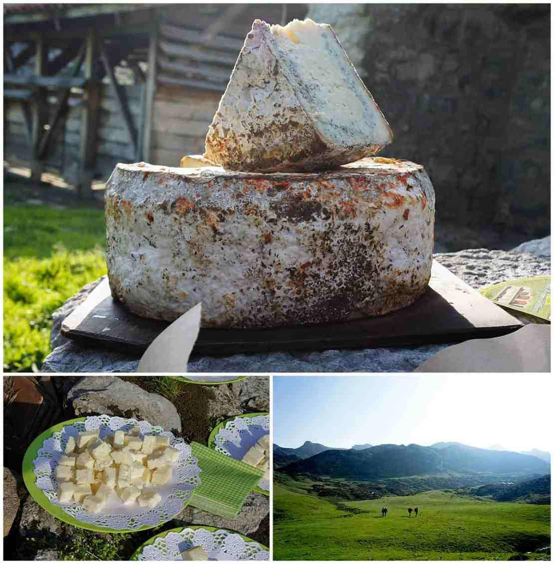 Picos Europa Authentic Farmed Cheese