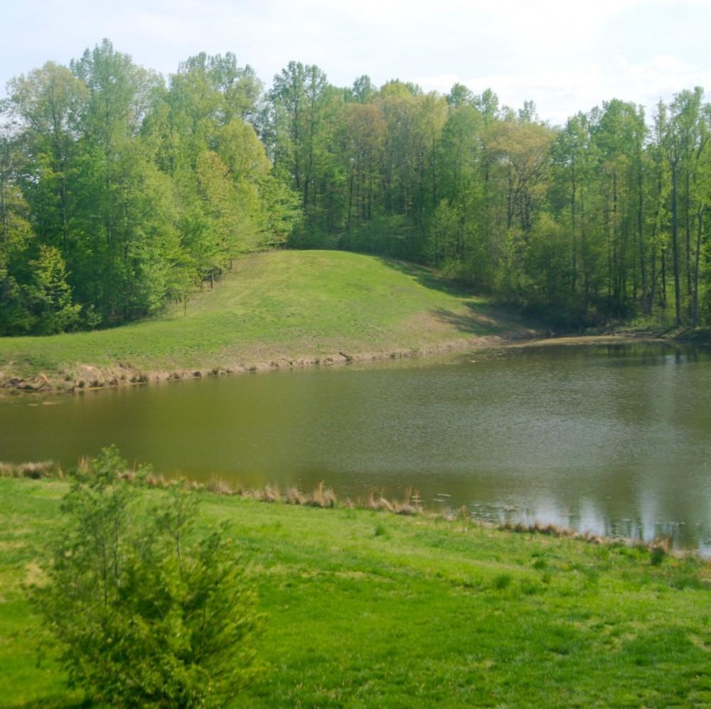 Pence Pond 1