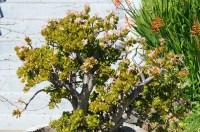 Shade Succulents: Drought-Tolerant Garden Guide | INSTALL ...