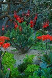 4 San Diego Gardens Full of Landscaping Ideas | INSTALL-IT ...