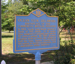 Ocean View Car Insurance