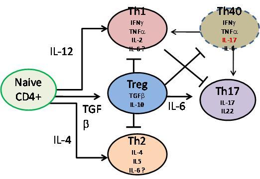 The Role of T Cells in Type 1 Diabetes IntechOpen