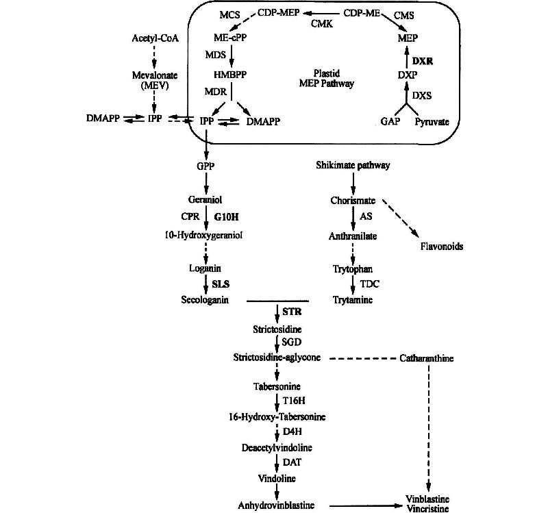 Production of Useful Secondary Metabolites Through Regulation of
