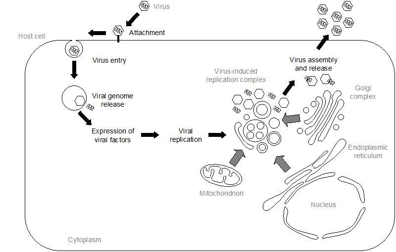 lipid involvement in viral infections present and future