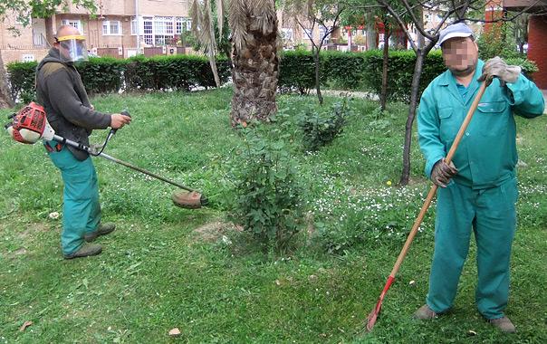 Dos operarios especialistas en trabajos de jardinería.
