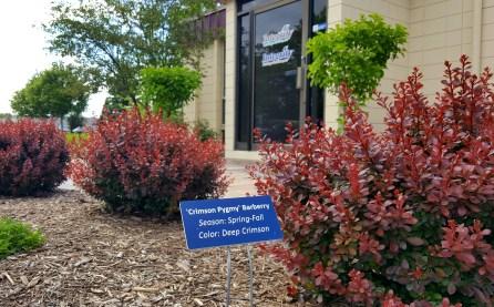 landscaper, landscape companies, landscapers in, Franklin landscaping, low maintenance