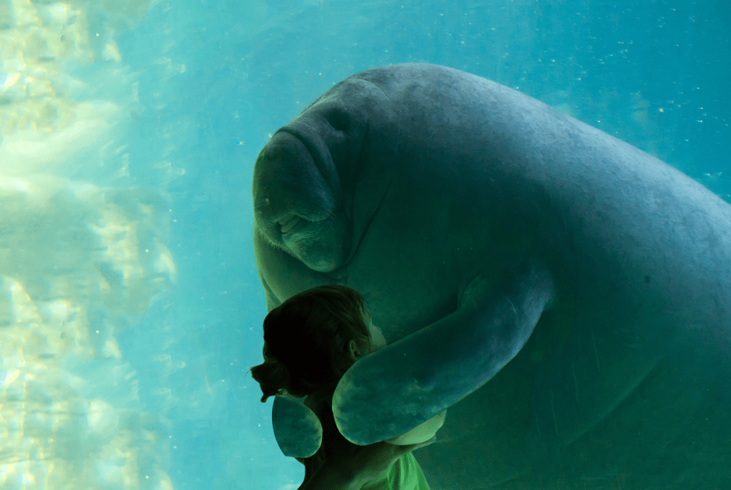 Cute Blobfish Wallpaper For Manatee Appreciation Day A Photoshop Battle Of