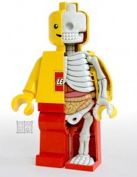 Anatomy of a Lego Minifig