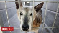 California pet shops to sell only rescues