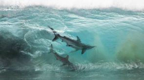 How a Gold Coast photographer captured a shark feeding frenzy