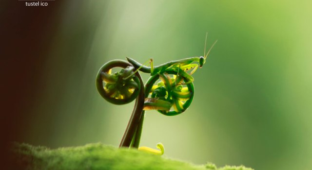 praying-mantis-bike.jpg