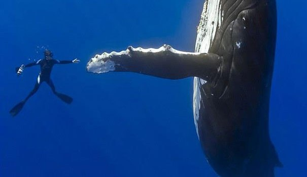 diver-whale-high-five-perfect-timing.jpg