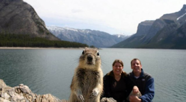 squirrel-photobomb-banff.jpg