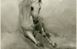 The-beauty-and-grace-of-horses-in-the-photos-by-Wojtek-Kwiatkowski-04ss