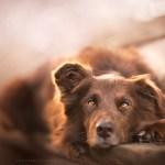 Dog Portraits Photography by Alicja Zmysłowska (12)