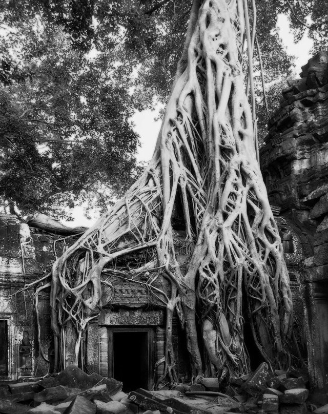 Famous_Photographs_of_Trees_by_Beth_Moon (15)
