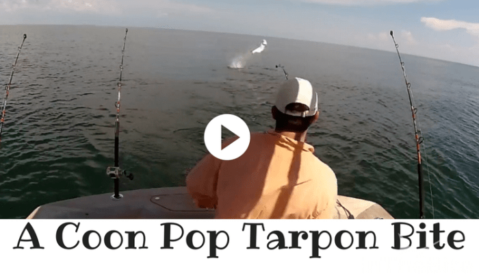 Check Out The Underwater Tarpon Bite