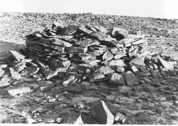 شوشات صحراوية