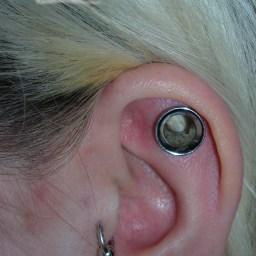 Cartilage Piercings Various INVSELF16