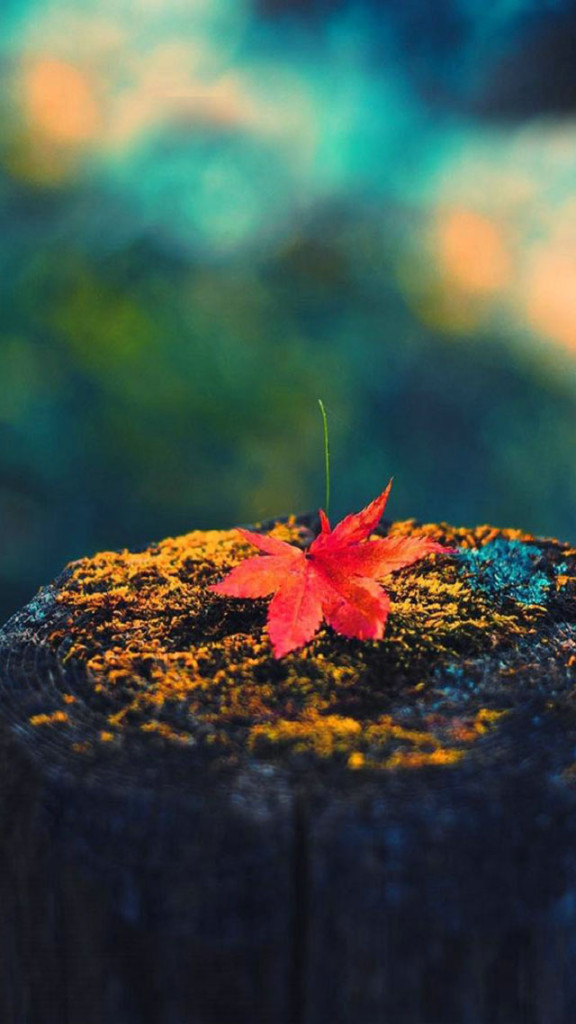 Iphone 5c Fall Wallpaper The Best Fall Or Autumn Themed Wallpapers For Iphone 5s