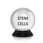 Why I am very optimistic about the future of the stem cell field
