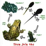 Hop to it: report your Irish frog sightings