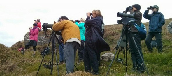 Watching whales from a West Cork headland on the Spring 2014 Discover Wildlife Weekend