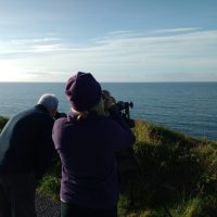 Fin whales to firecrests -- wildlife extremes on the Wild Atlantic Way.