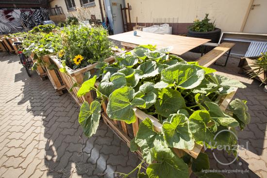"""Mit dem Projekt """"Refugee Gardens"""" wollen Magdeurger ihren neuen Mitbürgern das Leben in den Quartieren freundlicher gestalten"""