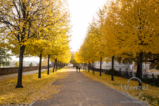 Magdeburg im Herbst - Fürstenwall