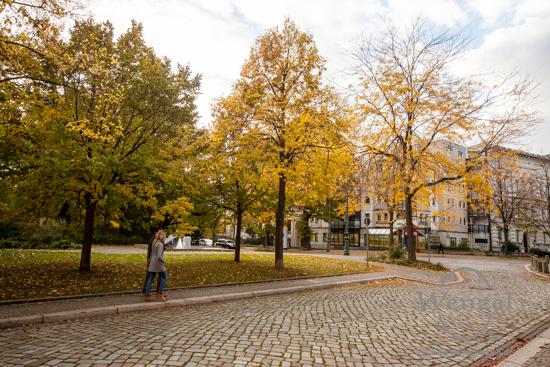 Magdeburg im Herbst - am Dom