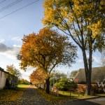 Herbst im Magdeburger Umland